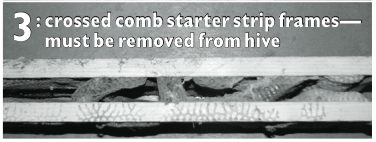 (photo 3) Crossed Comb Stater Strip Frames