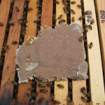 March 2012- The Beekeepers Calendar