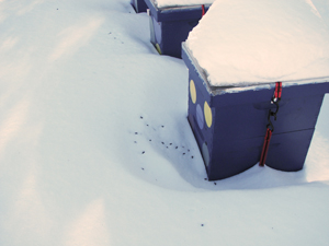 Every single colony in theWestbrook yard had dead bees in the fresh snow outside the hive,indicating that the bees inside were alive and well.
