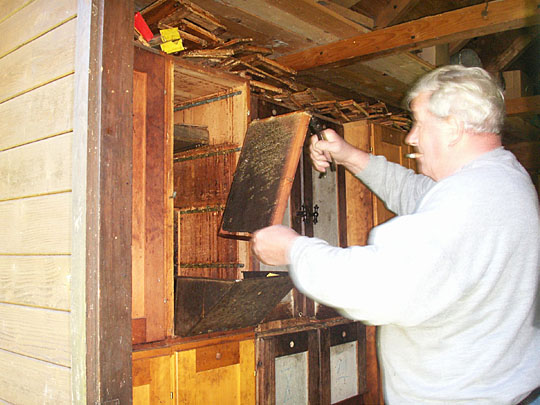 The beekeeper, with smoker and tools, selects a hive, and inspects a single frame at a time. (Note the fancy metal debris catcher fitted to the bottom edge of the opened bee box.) Choosing a prime bee-foraging day when most of the field force is out is very helpful!