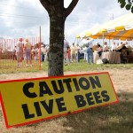 caution-live-bee-eas-rhode-island-featured