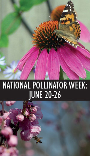 National Pollinator Week 2011