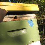 November 2012 – The Beekeepers Calendar