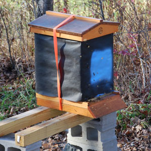 Hive Wrapped for Winter in Maine