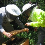 Care and Feeding of a Beekeeping Mentor