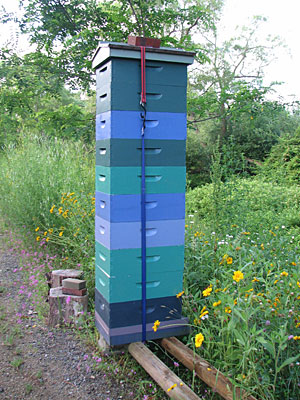 Booming Hives in Southern Maine - June 2012