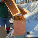 Feeding Bees in Winter
