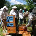 Show Support for Beekeeper Limited Liability Law