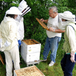 sagadahoc-open-hive