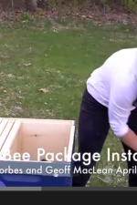 honey-bee-package-installation