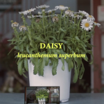 neonicotinoids-video