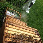 Junior Beekeeper