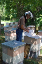 Michael Palmer of French Hill Apiaries in St. Albans, Vermont in his bee yard - photo: D. Israel