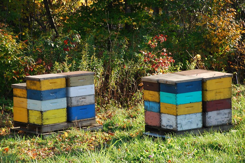 autumn hives
