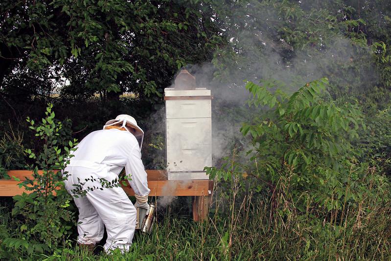bee hive beekeeper