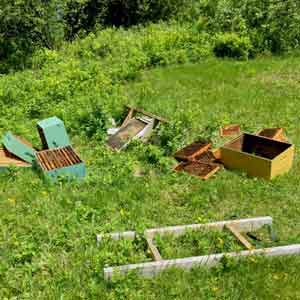 bear damage to bee hives