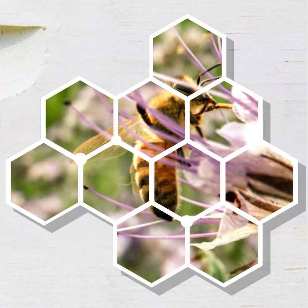 Bee Health Collective