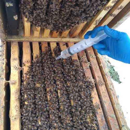 Oxalic Acid dribble on hive