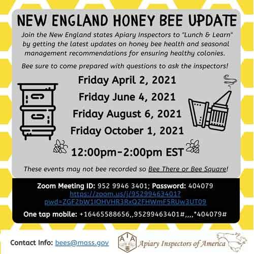 new england honey bee update