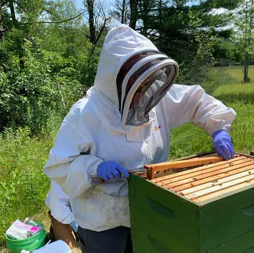 State Apiarist Jen Lund inspecting a hive