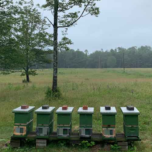 Nucleus honey bee colonies