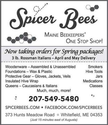 Spicer-bee